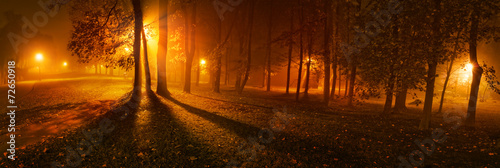 Spoed Foto op Canvas Bruin Panoramic view of trees on a foggy night in park
