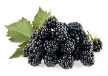 Mulberry-tree