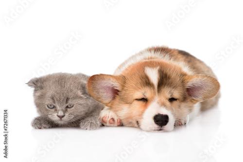 sleeping Pembroke Welsh Corgi puppy and kitten. isolated on whit © Ermolaev Alexandr