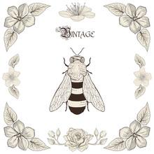 Bee Drawing Vintage Engraving Style
