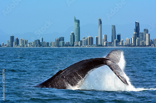 In de dag Australië Whale Watching in Gold Coast Australia