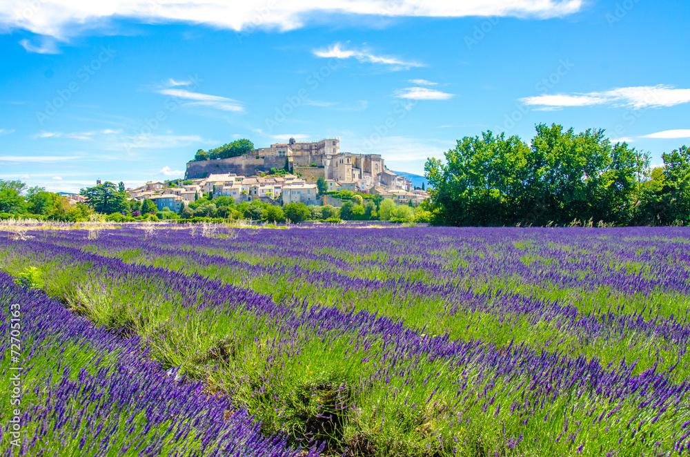Fototapety, obrazy: Provence - Lavender fields in France