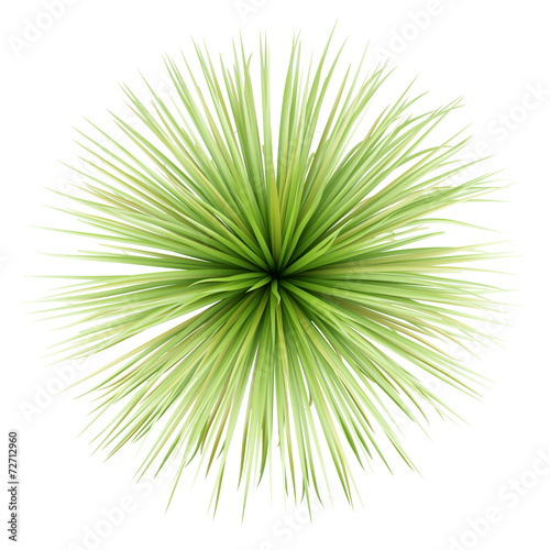 top view of potted palm tree isolated on white background Wall mural