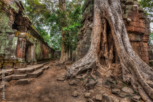 Poster Ruine Ancient ruins and tree roots, Ta Prohm temple, Angkor, Cambodia