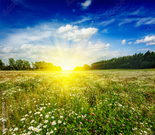 Poster Jaune Summer blooming meadow field