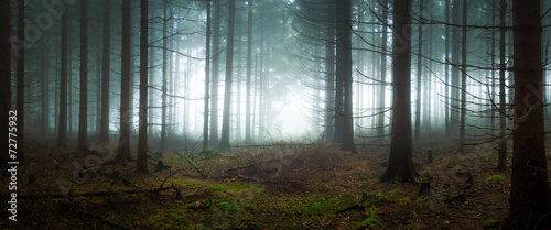 Spooky forest in the fog