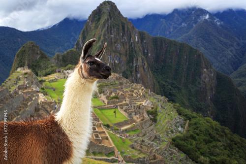 Poster Lama Machu Picchu, Peru, UNESCO World Heritage Site. One of the New S