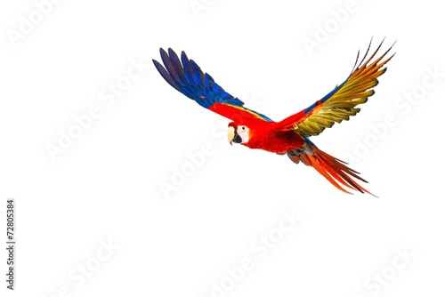 Crédence de cuisine en verre imprimé Perroquets Colourful flying parrot isolated on white
