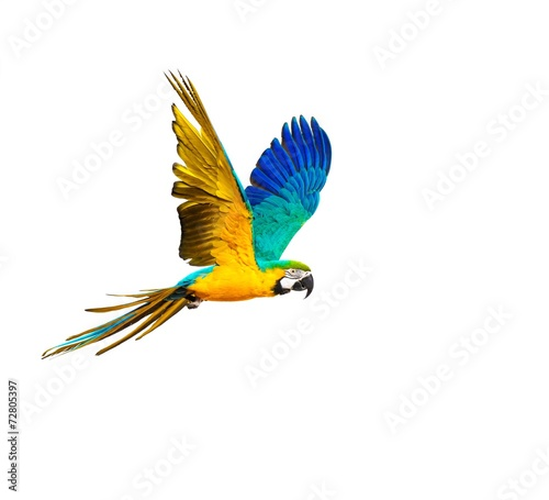 Tuinposter Papegaai Colourful flying parrot isolated on white