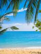 Exotic Paradise Coconut Getaway