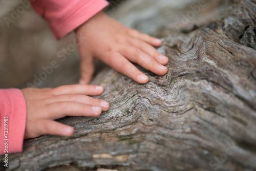 Fotografia  老木を触る子供の手