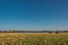 Horsemen In The Golden Field O...