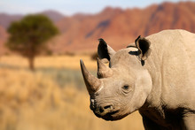 Portrait Of A Black Rhinoceros