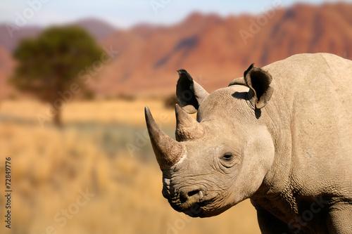 Spoed Foto op Canvas Neushoorn Portrait of a black rhinoceros