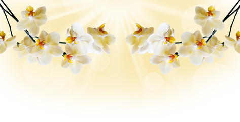 Fototapeta Beautiful white orchid