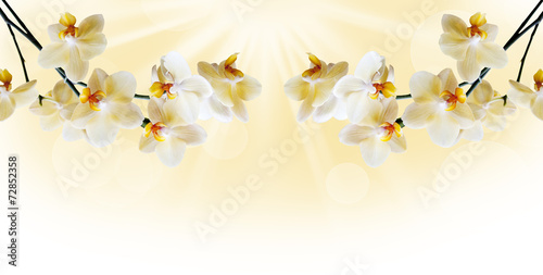 Fototapeta Beautiful white orchid obraz