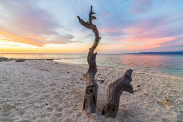 Fototapeta Braided tree on beach at sunset