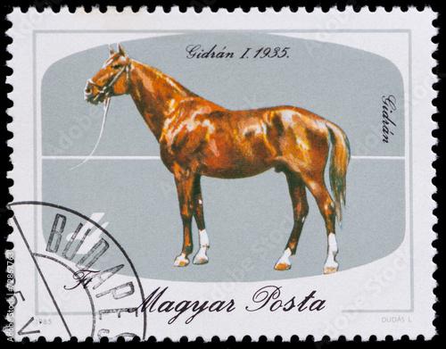 Fotografia  horses series