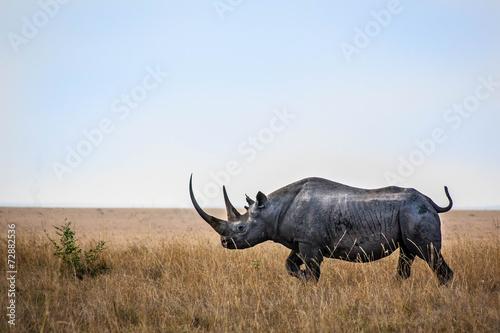 Spoed Foto op Canvas Neushoorn Nashorn in Bewegung