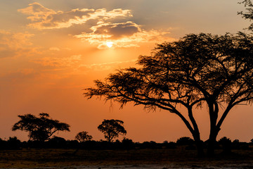 Fototapeta na wymiar African sunset with tree in front