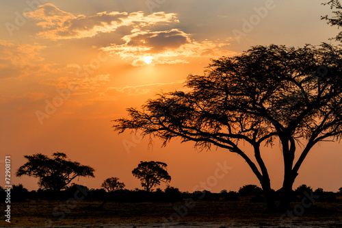 Obrazy na płótnie Canvas African sunset with tree in front