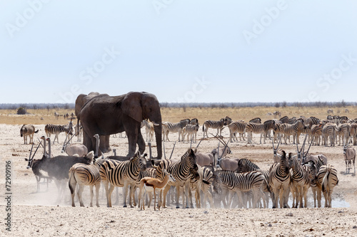 Poster Antilope crowded waterhole with Elephants, zebras, springbok and orix