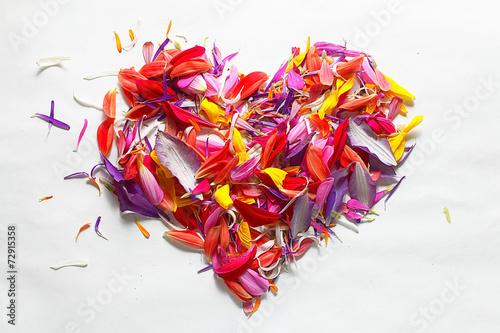 Fotografía  flying red petals, flowers lightness concept