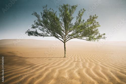 Vászonkép Desert Tree