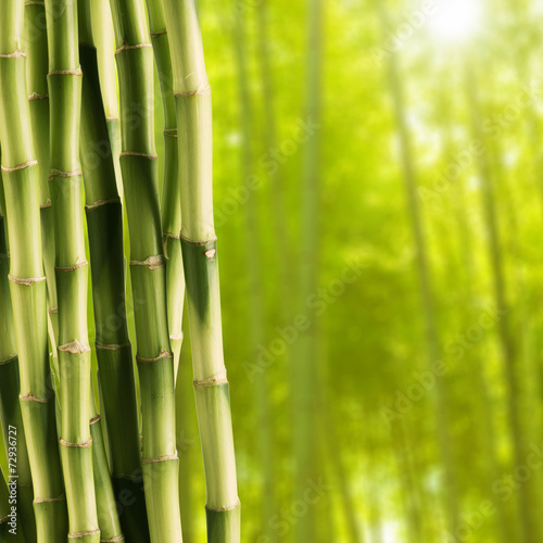 Acrylic Prints Bamboo Fresh bamboo with Bamboo forest background