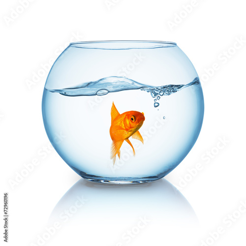 Fotografie, Obraz  Goldfish floating in fishbowl