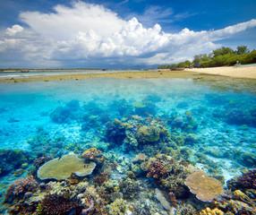 Beautiful Coral Reef.