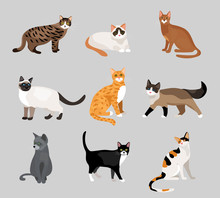 Set Of Cute Cartoon Kitties Or...