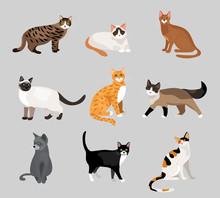 Set Of Cute Cartoon Kitties Or Cats