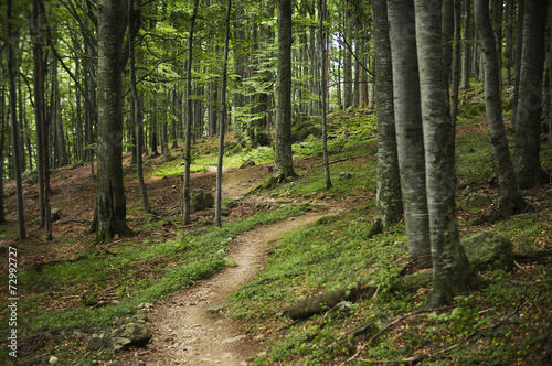 Tuinposter Weg in bos Forest path