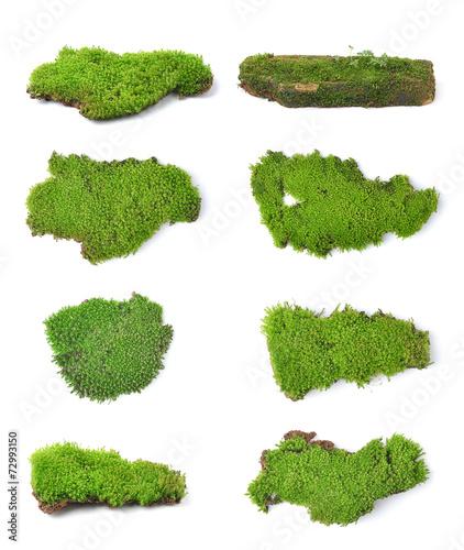Fotografie, Obraz  Green moss isolated on white bakground
