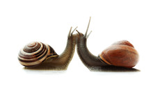 Concept Of Two Snails In Love