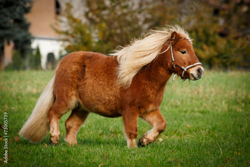 Photo  Dickes Pony trabt