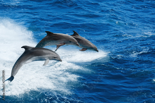 Stickers pour portes Dauphin Three dolphins