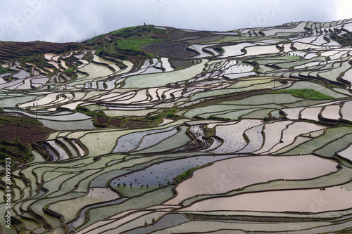 In de dag Rijstvelden Terraced rice field in Yuanyang, Yunnan province, China