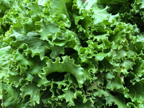 Fotografie, Obraz  Fresh green lettuce at the farmers Market