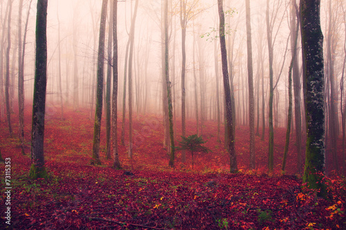 Fantasy red colored forest scene