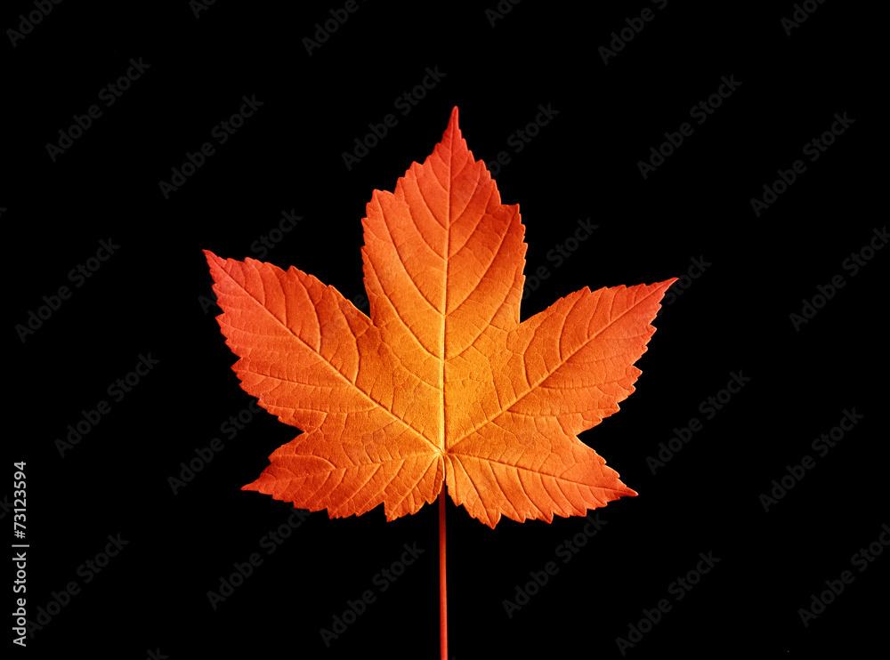 Fototapeta liść jesienny B
