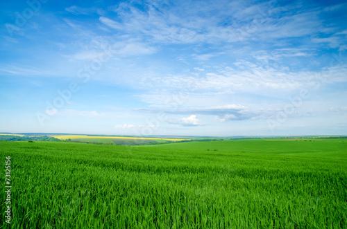 Foto op Plexiglas Platteland field of grass and perfect blue sky
