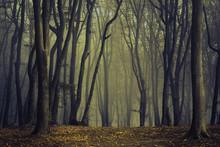 Spooky Silhoutte Trees In Dark...