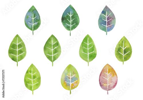 Cuadros en Lienzo  いろいろな葉っぱ 水彩イラスト