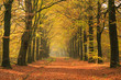 Warm autumn colors in a beautiful lane in a forest.