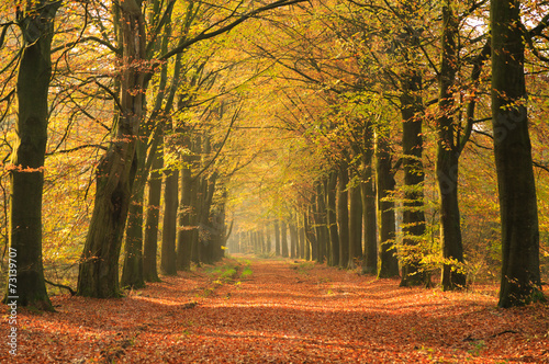 Warm autumn colors in a beautiful lane in a forest. - 73139707