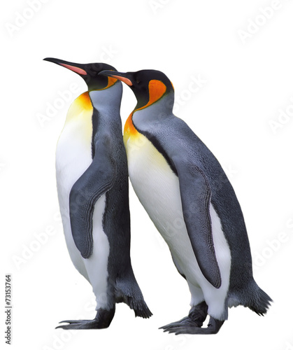 Poster Antarctique Two isolated emperor penguins