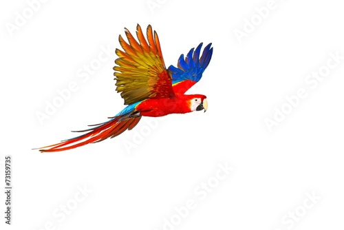 Foto op Canvas Papegaai Colourful flying parrot isolated on white