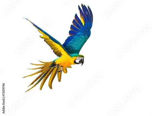 Fényképezés Colourful flying parrot isolated on white